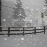 Bufere di Neve sulla Sila Tirrenica: Video-Reportage