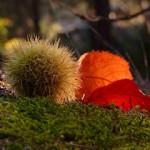 Imminente peggioramento, primi passi verso l'autunno all'orizzonte